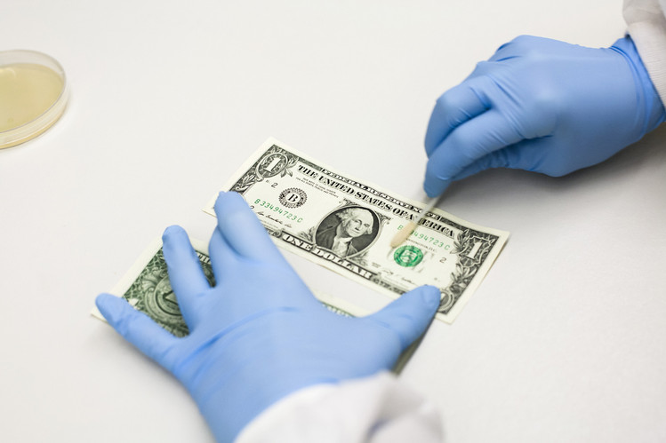 bacteria and money