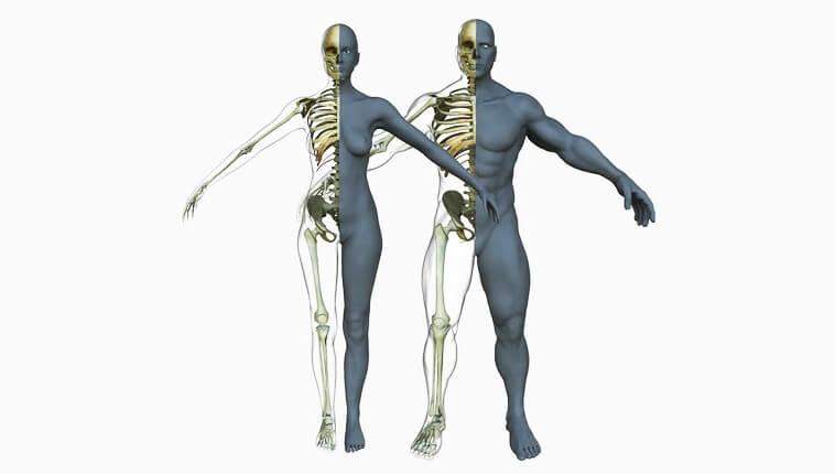 skolko-kostej-v-tele-cheloveka-vzroslogo-infozet